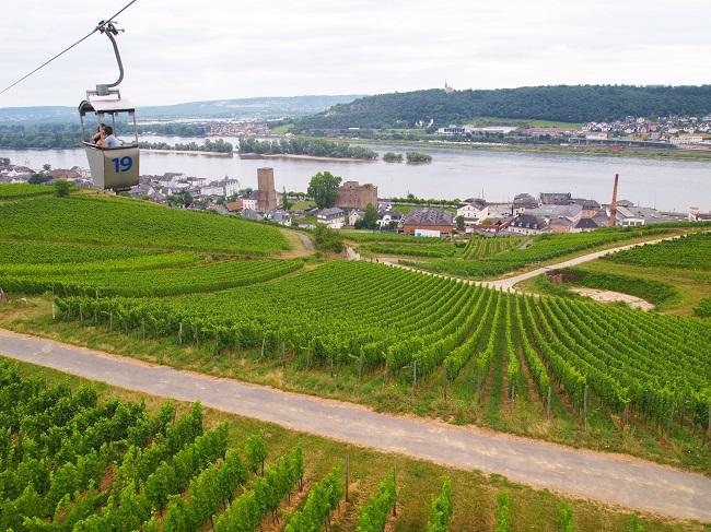 【家族・親戚とドイツ観光】リューデスハイムのブドウ畑の上を空中散歩