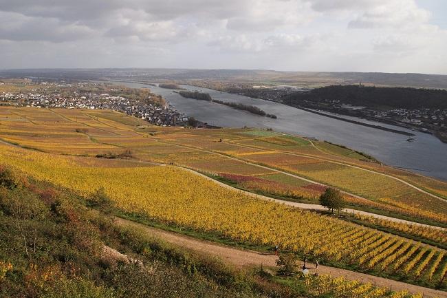 ドイツでも紅葉!ライン川で黄色く染まったワイン畑が美しい