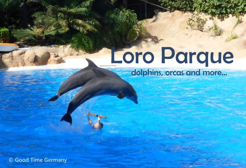 テネリフェ島一番人気 イルカやシャチショーも楽しめる動物園・水族館「ロロパーク」