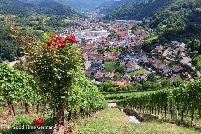 エバーシュタイン城 ワイン畑